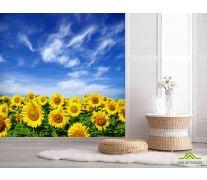 Фотообои Подсолнухи и небо
