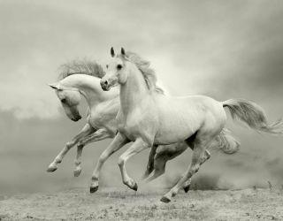 Фотообои животные  в Луцке