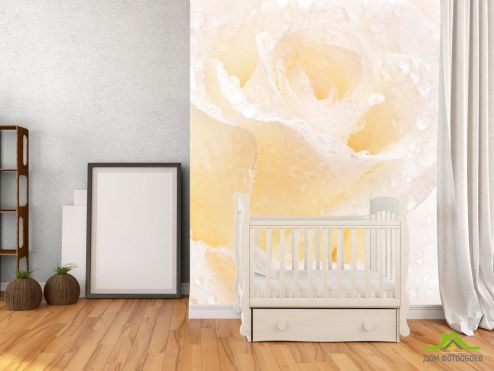 обои Цветы Фотообои Распустившаяся роза белоснежная