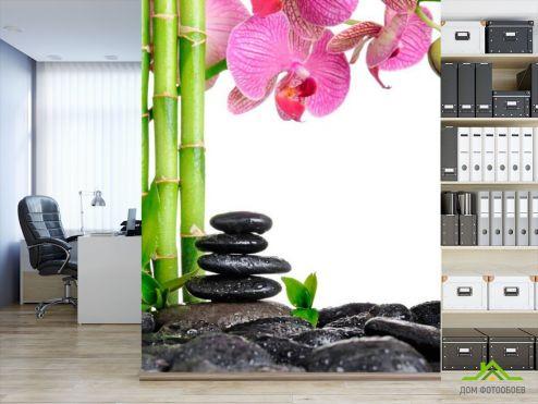 обои Бамбук  Фотообои Бамбук и орхидея