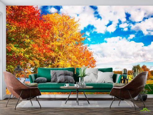 Природа Фотообои Осень, деревья