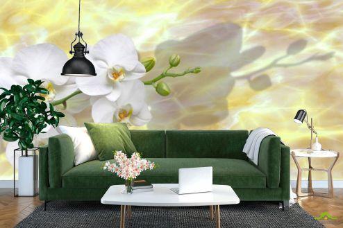 Орхидеи Фотообои белые орхидеи на  желтом фоне