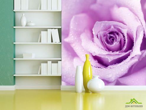 Фотообои разные по выгодной цене Фотообои роза