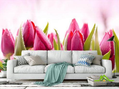 обои Цветы Фотообои Розовые тюльпаны