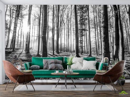 Природа Фотообои серый лес