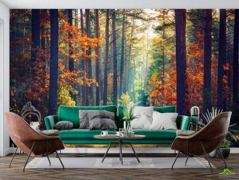 Природа Фотообои сентябрьский лес купить