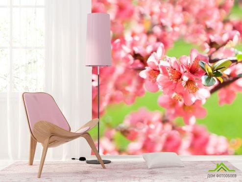 обои Цветы Фотообои Вишня цветущая весной