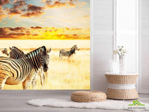 обои Зебры Фотообои Стадо зебр