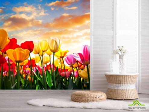 Тюльпаны Фотообои Тюльпаны в закате купить