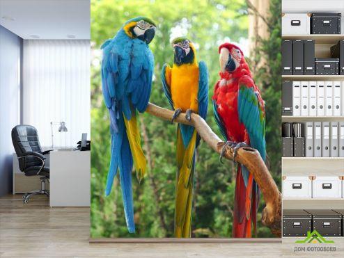 Фотошпалери Тварини Фотошпалери три папугу
