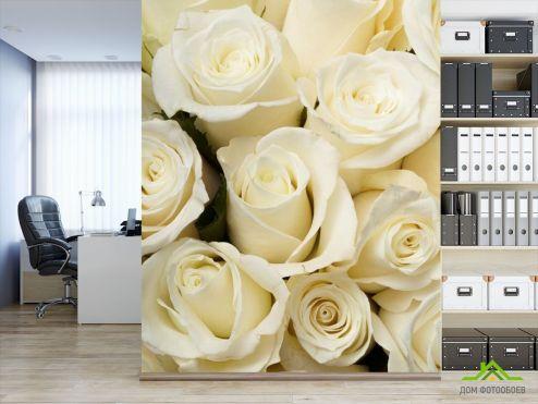 Розы Фотообои белые розы