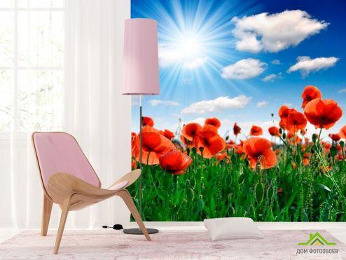Маки Фотообои Маки под палящим солнцем