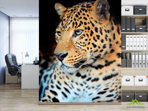 Гепарды Фотообои Ленивый гепард