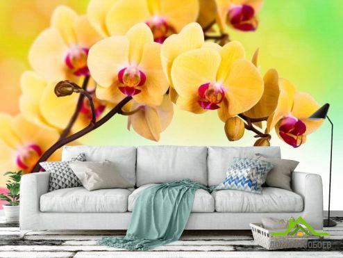 Фотошпалери, колір: «жовтий» Фотошпалери Жовта орхідея