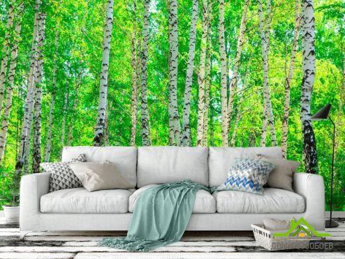 лес Фотообои Тень, березы
