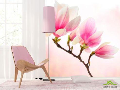 обои Цветы Фотообои Бледно-розовый кипарис