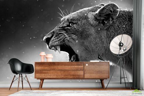 Черно-белые  Фотообои львица