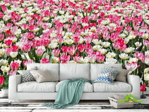 обои Цветы Фотообои Поле разноцветных тюльпанов