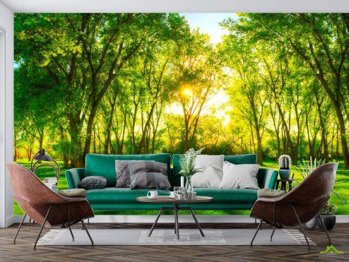 Природа Фотообои Зеленые деревья