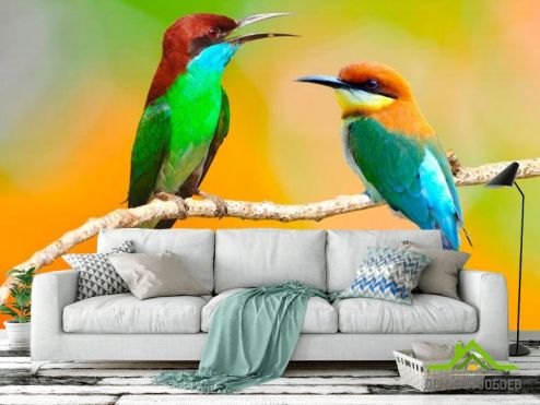 обои Птицы  Фотообои Колибри на ветке