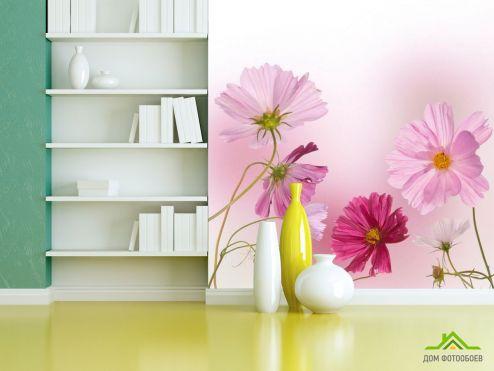 обои Цветы Фотообои Ромашки розовые и малиновые