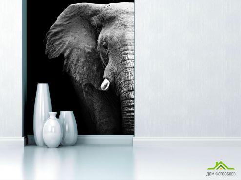 обои Животные Фотообои Слон в темноте