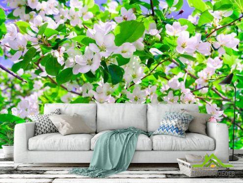 обои Абрикос Фотообои Абрикос в цвету