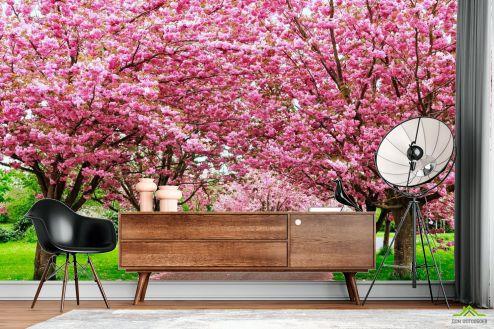 Розовые деревья Фотообои Сакура