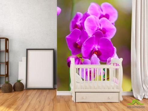 обои Орхидеи Фотообои ветка орхидеи