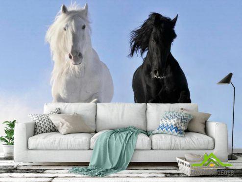 Лошади Фотообои Инь и Янь