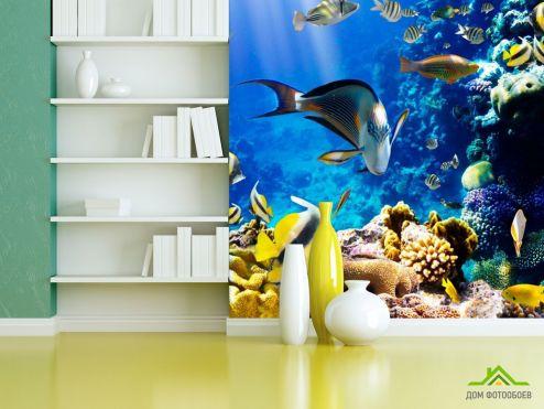 обои Море Фотообои Косяк рыб