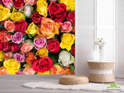 обои Цветы Фотообои Розы разноцветные