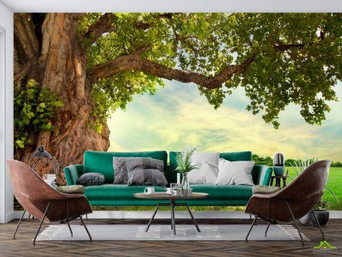 Природа Фотообои большое дерево
