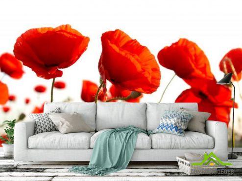 Маки Фотообои Маков красных поле