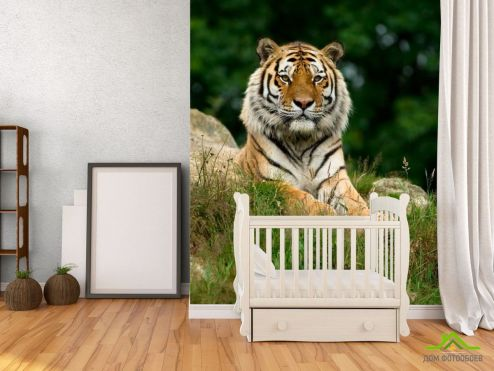 Тигры Фотообои Величественный тигр