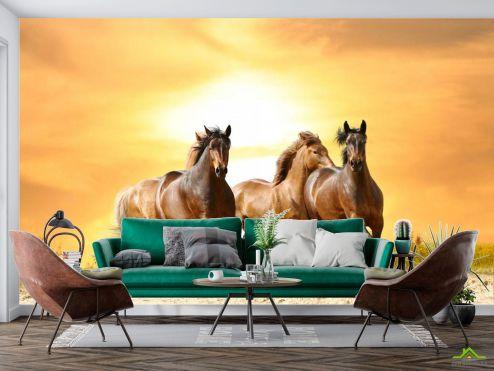 Лошади Фотообои Мустанги на прогулке