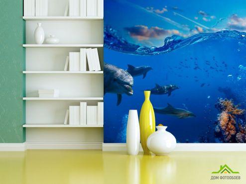 Дельфины Фотообои Дельфины в море