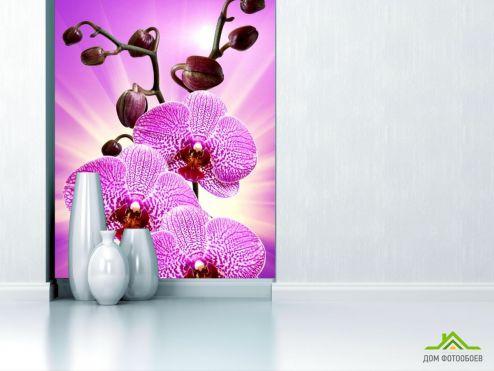 обои Орхидеи Фотообои леопардовая орхидея с сиянием