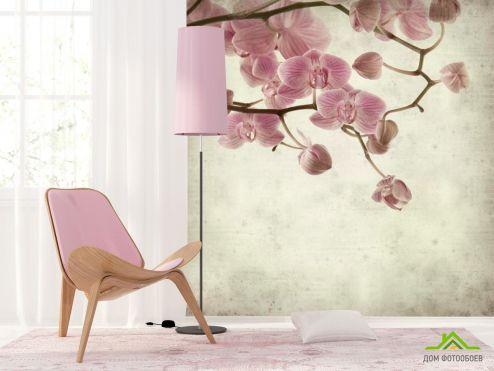 обои Орхидеи Фотообои Орхидеи кремово-серые