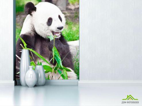 Панды Фотообои Отдыхающая панда