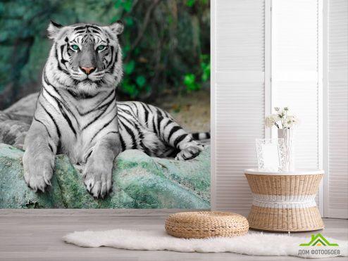 Тигры Фотообои Зеленоглазый тигр
