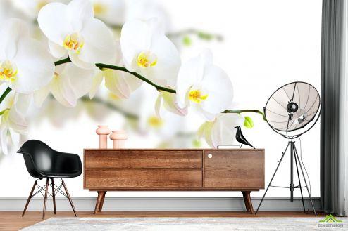 Орхидеи Фотообои веточка белой орхидеи