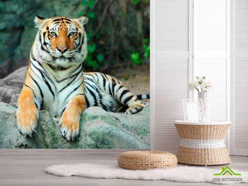 обои Животные Фотообои Отдыхающий тигр