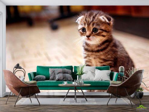 Животные Фотообои Грустный котенок