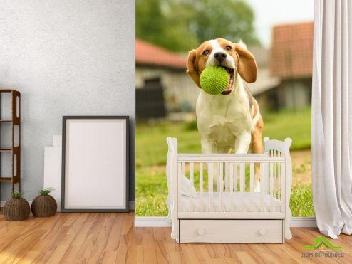 Фотошпалери Тварини Фотошпалери собака з м'ячиком