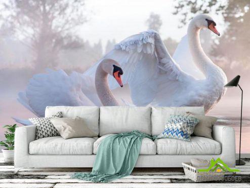обои Животные Фотообои Лебеди