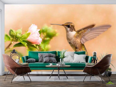 Животные Фотообои Полет колибри