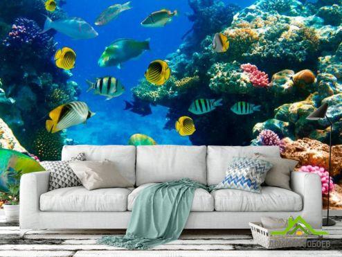 Рыбы и море Фотообои Рыбий косяк