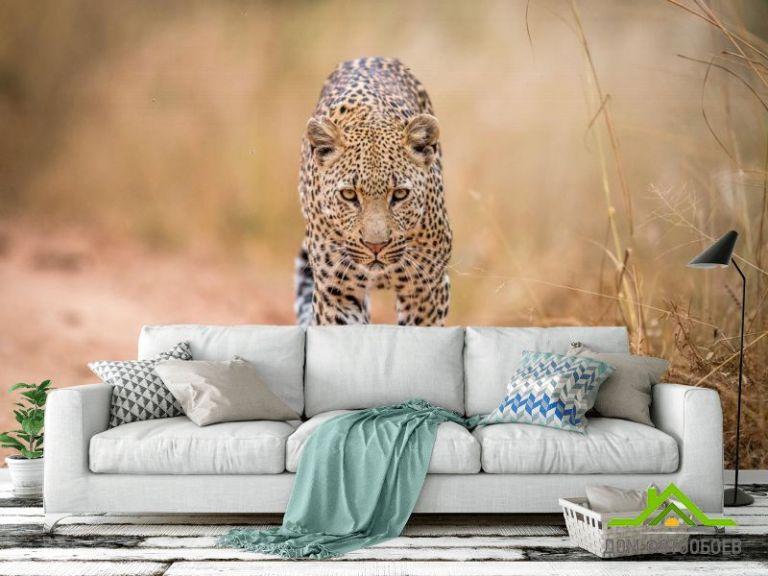 Фотообои гепард