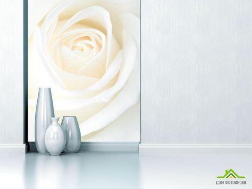обои Цветы Фотообои Белая распустившаяся роза